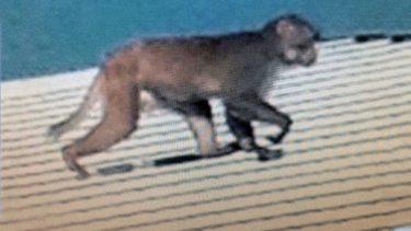 美国发现可传人的猴子疱疹病毒:中招后症状可怕